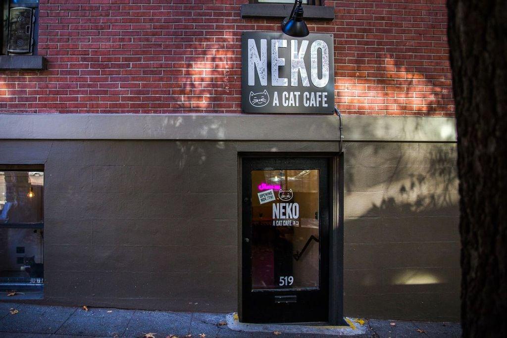Neko Café in Tokyo