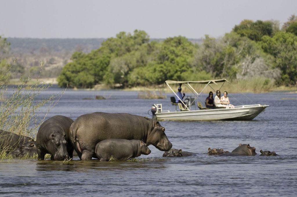 Powerboat ride on the Okovango Delta