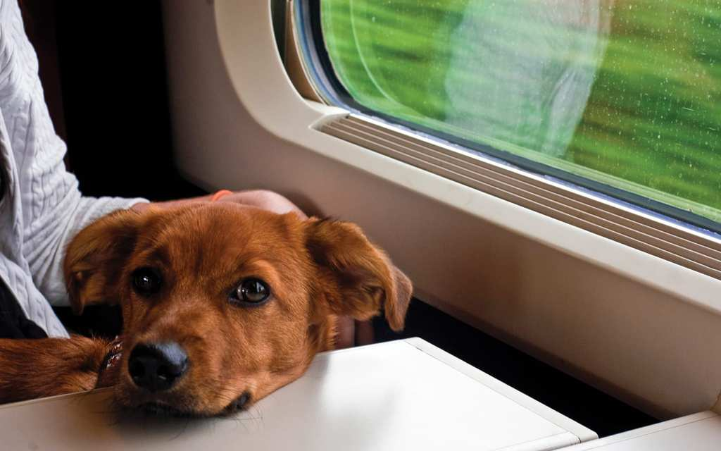 A pet on board of a train