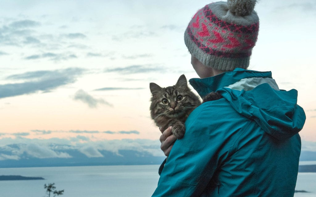 A cat owner holding their pet